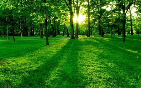 Green Forest - g, eliseu, green, sun, spring, nature, trees