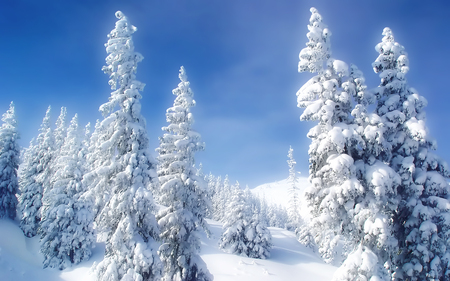 winter - landscape, cold, widescreen, snow, fondecran, winter