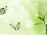 Bamboo Butterflies and Bokeh