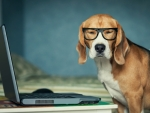 Dog with glasses and PC