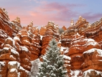 snow in red canyon state park in utah