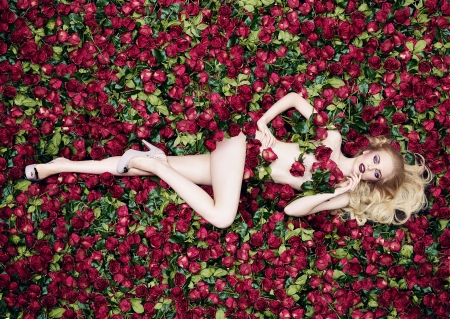Image result for a bed of roses