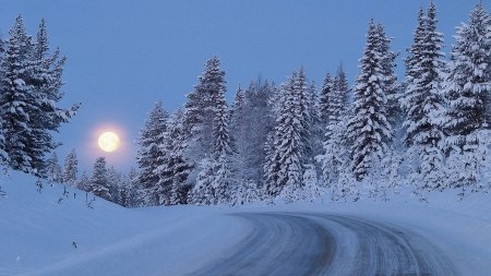 moon in winter - moon, winter, road, trees