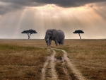 elephant waiting for a bus on the savanna