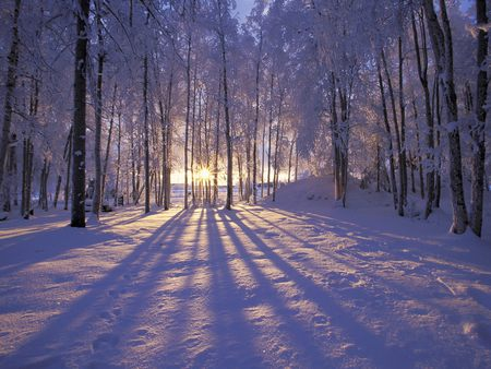 Winter Sunset - trees, arctic, frost, ice, white north, sunset, snow, winter, alaska