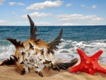 Seashell and starfish