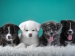 A Quartet of Puppies