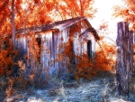 abandoned cabin in an autumn forest hdr