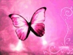 *Pink Butterfly*