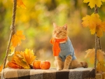 Autumn Cat