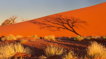 Sunset Desert - sunset, sand, bush, shadow