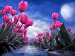 Moon Kissed Tulips