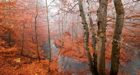 Autumn River - lakes, river, fall, forest