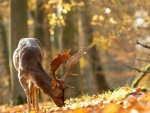 the deer in a fall forest