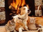 dog and cats by the fireplace