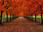 Autumn tree alley