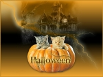 Kittens in a Halloween Pumpkin