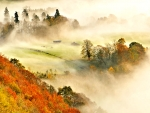 Misty morning, Kinnoull Hill Woodland Park, Perthshire, Scotland
