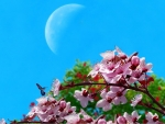Cherry Blossom and Moon