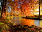 Forest river in autumn