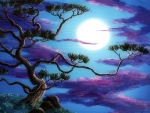 Moonlight Pine Tree