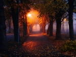 Foggy Autumn Alley