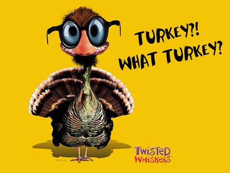 What Turkey - 3d, funny, turkey, thanksgiving