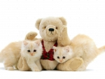 cute kittens and teddy bear