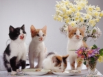 cute kittens on the table