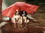 Two puppys in the rain