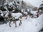 Reindeers and sleigh into the snow