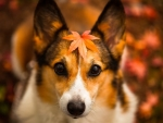 Cute autumn dog