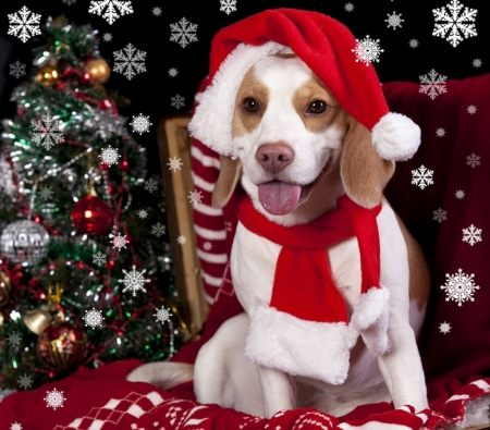Christmas Pictures - Free Images of Christmas - Free Photos