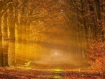 magical sunbeams in an autumn forest