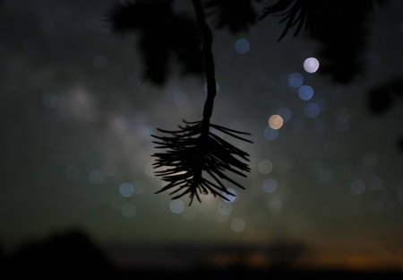Star Colors and Pinyon Pine - space, cool, stars, tree, nature, fun