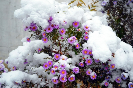 winter flowers  flowers  nature background wallpapers on desktop, Beautiful flower