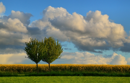 Trees - landscape, sky, trees, nature