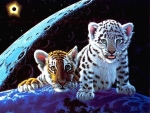Little Tiger and Snow Leopard
