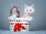 Sweet Kittens in Basket