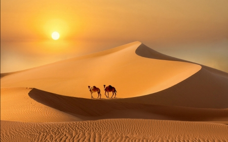 Desert at Sunset - desert, sunset, camels, sand