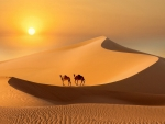 Desert at Sunset