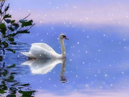 Snow Swan - love four seasons, pond, holidays, swan, snow, xmas and new year, winter, creative pre-made, attractions in dreams