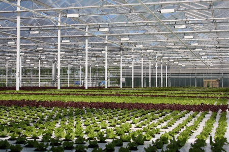 greenhouse of greens - plants, greenhouse, green, nature, plant