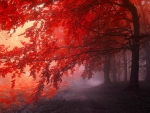 At the edge of the red forest