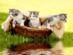 Kittens in basket