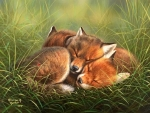 Warm Baby Foxes