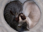 ~ ♥ღ Heart of Cats ღ♥ ~