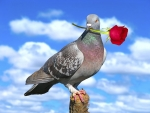 Rose dangling pigeon