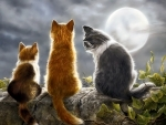 Cats and Moonlight