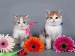 Kittens Loves Flowers